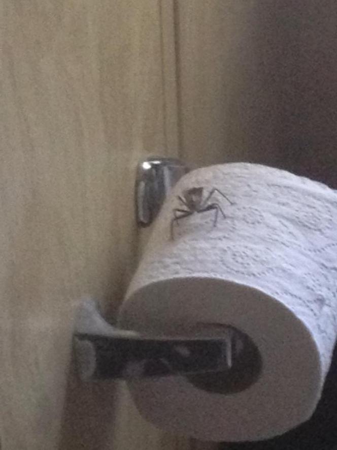 Friday Funny: Bathroom Humor PlantingMe.com bug