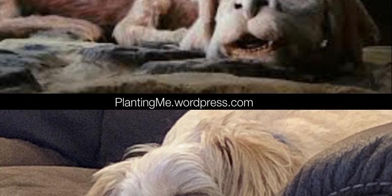 Sandy's grand-dog plantingme.com Friday Funny
